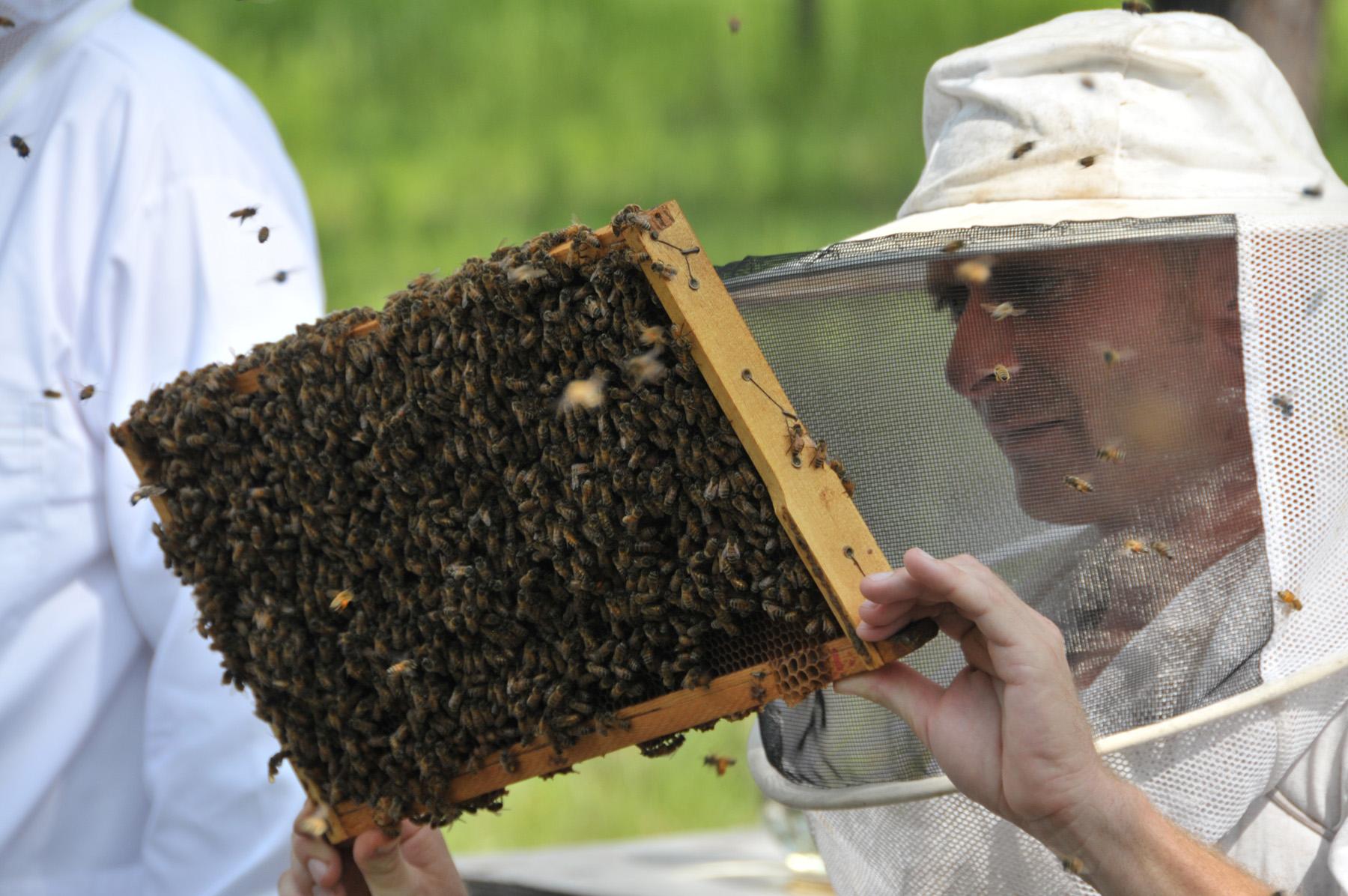 https://fdacsdpi.files.wordpress.com/2011/08/inmate-beekeeper-training-2.jpg