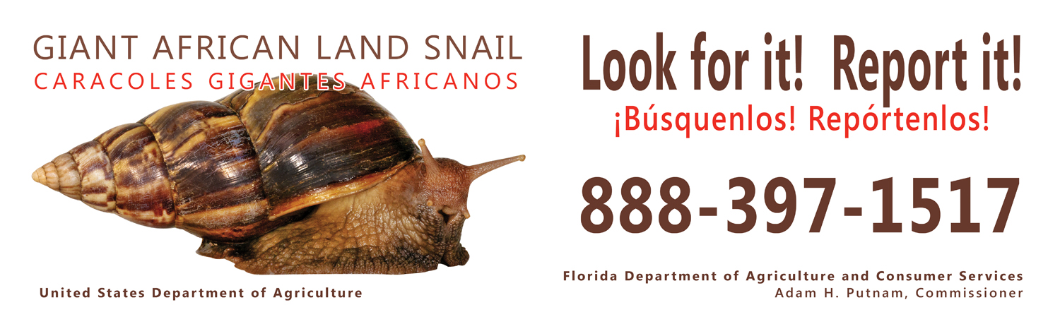 Giant african snail fresh from florida plant industry gals billboard2 giant african land snails freerunsca Gallery