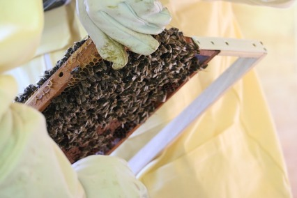 bees-1631206_640