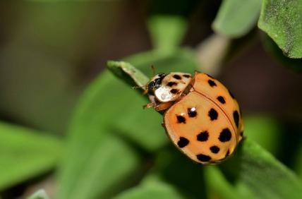 ladybug-1622811_640